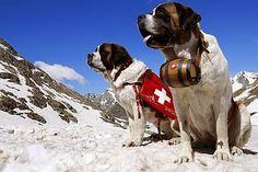 ListasDe10.com: Las 10 razas de Perros Mas Grandes