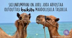 Wednesday Hump Day, Finland, Camel, My Love, Animals, Life, Quotes, Inspiration, Ideas