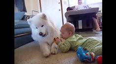 Do Dogs Make The Best Nannies For Kids? Well This Video Compilation Says So…This is a brilliant compilation of dog and kids videos to make you laugh and chuckle along all day. We often hear of dogs hurting children so it makes a nice change to see the other side of the story and watch them all playing along together fine.
