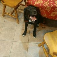 Welcome, Apollo, to our Dog Training In Your Home family! This guy looks ready to get started :-) Thanks, @SpringValleyAnimalHospital for referring us! #weloveourclients #welovereferrals #dogtraininginyourhome #dogtraining