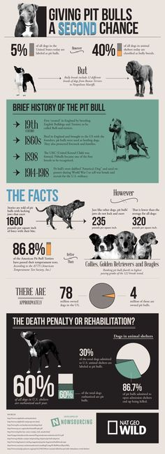 Learn the facts before you judge my breed...theyre just dogs. #pitmama#lovemypits