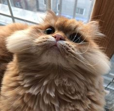 These pretty cats will brighten your day. Cats are fascinating friends. Cutest Animals On Earth, Cute Baby Animals, Animals And Pets, Funny Animals, I Love Cats, Crazy Cats, Cool Cats, Pretty Cats, Beautiful Cats