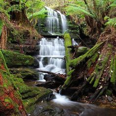 Myrtle Gully Falls on kunanyi / Mt Wellington. One of the mountain's many wonders of Tassie that can be seen on the Iconic Ascent Walking tour. Tasmania, Walking Tour, Myrtle, Landscape Photography, Coastal, Waterfall, Blues, Gems, Australia