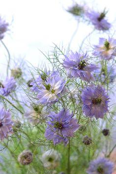Flower Garden : Photoim