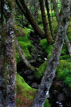 moss and trunks - vibrant green