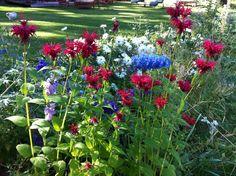"Wild Flower Garden along the edge of the ""Old Brockway Golf Course"" inTahoe"