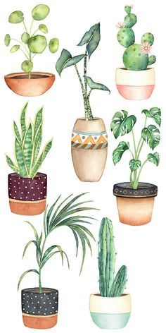 Plant Painting, Plant Drawing, Plant Art, Watercolor Succulents, Watercolor Cactus, Watercolor Paintings, Plant Illustration, Watercolor Illustration, Cactus Clipart