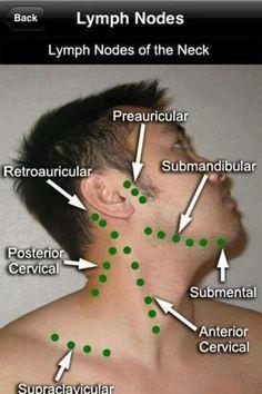 Linfonodos cabeza cuello