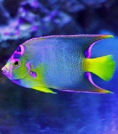 Colorful Fish 45