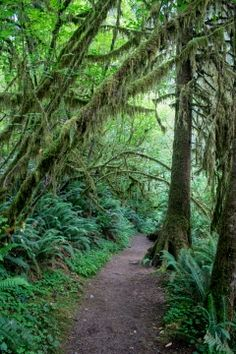 My ultimate guide to Olympic National Park! I outlined my trip with all my favorite stops along the way, going counter-clockwise around the park. Cascade National Park, National Parks, Olympic Peninsula, Washington State, Olympics, Travel Guide, Trail, Hiking, Country Roads