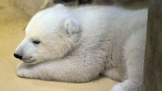 Do you know a name for our polarbear-baby in Bremerhaven?