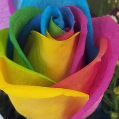 Tie dye rose... I want someone to give me one of these!