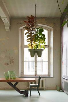 Plantlamp plant groen