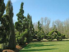 PEARL FRYAR #TOPIARY GARDEN Pearl Fryar | Pearl Fryar Topiary Garden. Photo by Bill Noble.   -   http://dennisharper.lnf.com/