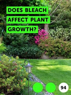 Does Bleach Affect Plant Growth?. Bleach will not only affect plant growth, but will most likely kill a plant altogether.  While chlorine in small doses is harmless or even beneficial to plants, concentrated chlorine such as bleach will destroy a plant and the network of life that plant depends on to obtain nutrients and thrive.
