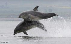 Los delfines nariz de botella (género Tursiops) cambian su capa externa de piel cada 2 horas.