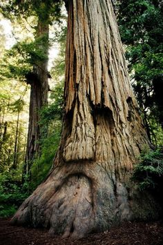 A tree with a face.