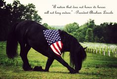 """Friesian stallion Keegan J. says """"Thank you for all you've done Veterans."""" Keegan is owned by Emily Jewell of Grace and Beauty Farms. Her husband Todd Jewell is a Veteran. Photo by Black Horse Photography Pretty Horses, Horse Love, Beautiful Horses, Animals Beautiful, Cute Animals, Beautiful Things, Simply Beautiful, Beautiful Pictures, Majestic Horse"""