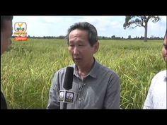 Hang Meas HDTV,09 November 2015,Part 03,Hang Meas Daily News,Khmer News ...