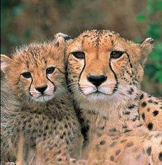 African Safari....  on my list.