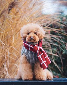 New York City's Best-Dressed Dogs of the Year via @PureWow