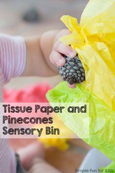 Image result for pine cones sensory tub