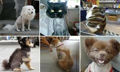 It's SHEAR madness! Pets show off some VERY wacky haircuts
