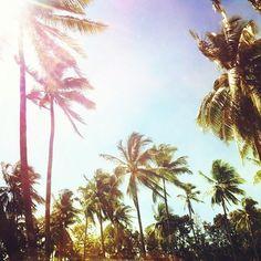 #beach #babe #girl #young #wild #free #summer #mood #moments #fun #happy #beachtime #summertime #sun #sunset #beach #sand #sandy #water #dreams #spirit #breeze #palm #paradise #wind