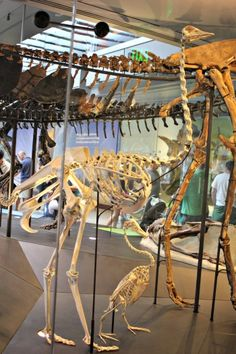 Dinosaur Encounters at The Natural History Museum of Los Angeles