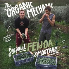 We think it's important to stay in tune with #nature. So what better way to tune up the body than flowing with what the #seasons provide?  That #zingy taste and #spritz of a Feijoa is so abundant at the moment, so we have decided to blend up a fresh, new, seasonal #Feijoa #smoothie.  Eating #local is also a big deal to us, so we've harvested the Feijoas ourselves, from a #plantation down the road. Each one has been hand picked, with #love, so you know they're good.