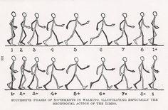 11 Animation Ideas Animation Walking Animation Animation Tutorial