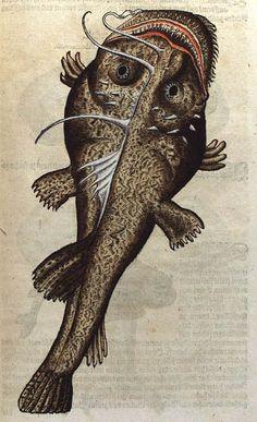 Historiæ Animalium by Conrad Gesner Sea Creatures Fabulous Beasts, Magnificent Beasts, Weird Sea Creatures, Weird Fish, Life Aquatic, Angler Fish, Alternative Art, Nature Illustration, Fish Print