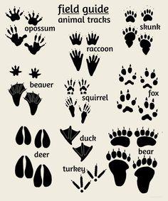 Woodland Nursery Art, Field Guide to Animal Tracks, Rustic Nursery Children's…