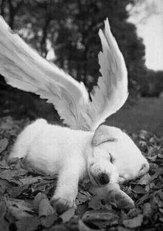 My angel pup Animals And Pets, Baby Animals, Funny Animals, Cute Animals, Cute Puppies, Cute Dogs, Dogs And Puppies, Doggies, Love My Dog