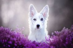 Les plus belles photos de chiens jamais vues