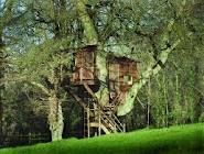 Live in a tree house