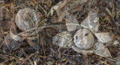 MARIO STRACK - The Forest 2 limitiert Fotografie Original signiert Bilder Pilze