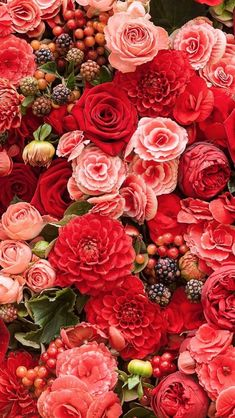 New Flowers Red Roses Nature Ideas Coral Roses, Red Roses, Deco Floral, Floral Wall, Flower Aesthetic, Flower Backgrounds, Iphone 7 Wallpaper Flower, Phone Wallpapers, Beautiful Roses
