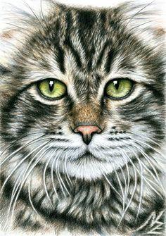 "Saatchi Online Artist: Nicole Zeug; Pencil 2013 Drawing ""Cats Face"""