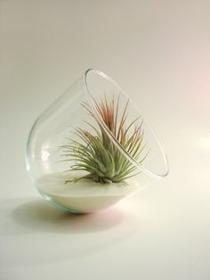 ok its an air plant..but i do love it and its home