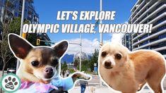 Dog Walk and Tour of Vancouver, British Columbia, Canada Olympic Village, Minka, Dog Walking, British Columbia, Olympics, Vancouver, French Bulldog, Pup, Canada