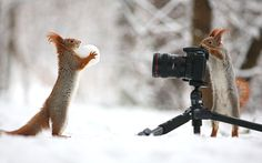 A squirrel poses with a snowball while another makes sure to capture the moment on camera. Photographer Vadim Trunov