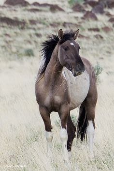 Wild Horses, Steens
