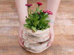 DIY-Anleitung: Blumentopf aus Baumscheiben bauen via DaWanda.com