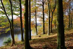 Woods Saved For Nation http://yorkshiretimes.co.uk/article/Woods-Saved-For-Nation