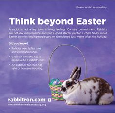 Easter bunny great information on the truths of rabbit ownership chocolate or stuffed animal bunnies are great easter gifts bunnies are not makeminechocolate rabbit bunny negle Choice Image