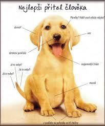 pes nejlepší přítel člověka
