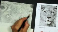 Learn To Draw, Graphite, Pencil Drawings, Lion, Homeschool, Doodles, Jar, Creative, Artist