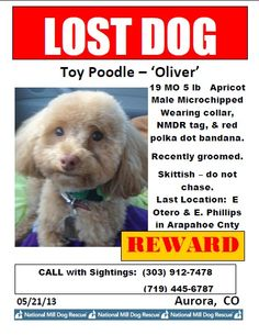 Missing Bring Them Home, Losing A Dog, Dog Toys, Lost