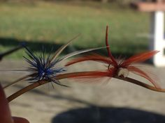 Nice dragonflies